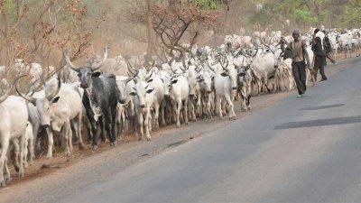 herdsmen/newsheadline247.com